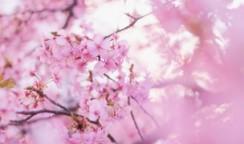 春は何かを始めるきっかけに。